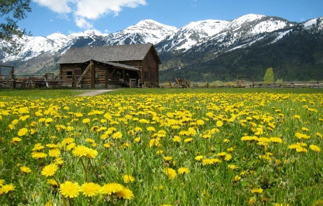 R Lazy S Ranch with wildflowers in bloom.
