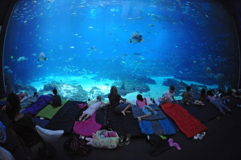Families settle down to sleep with the fishes at the Georgia Aquarium.