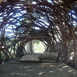 nest, Big Sur