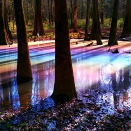 Only Delaware, our first state, lacks a national park. Here, organic materials in the plants and soil form a rainbow effect in the Congaree National Park, South Carolina.