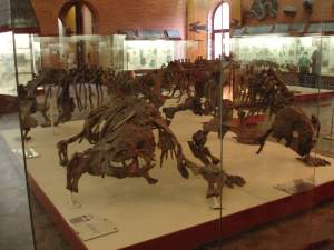 Dinosaurs ready to pounce Paleontology Museum Moscow