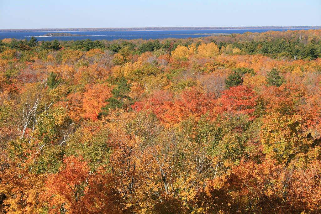 Fall Leaves in Door County