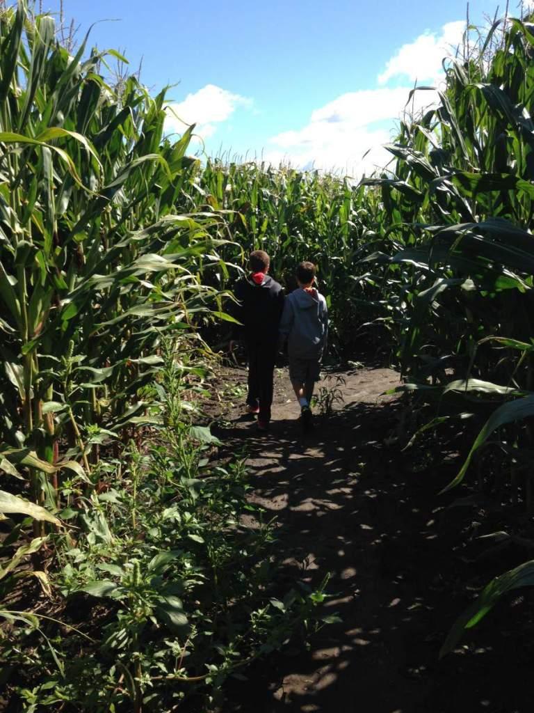 Explore Richardson Corn Maze-Kids Are A Trip