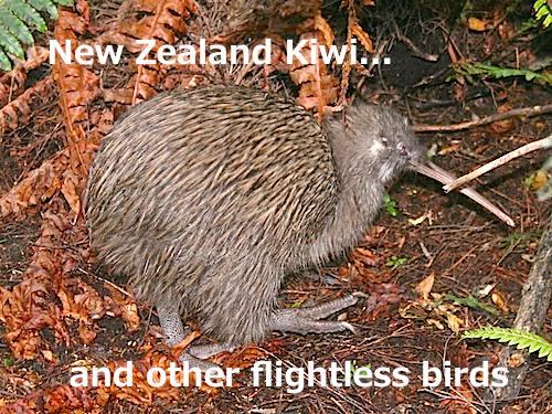 The Flightless Birds of New Zealand and Australia