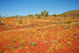 Spinifex bushes carpeting the landscape at Karijini