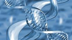 Transzgenerációs Epigenetikus Kineziológia©® II. A és B szintek A tanfolyam időpontjai: TEK II. szint A. része: 2015. április 9-12. (4 nap) TEK II. szint B. része: 2015. április 30-május 3. […]