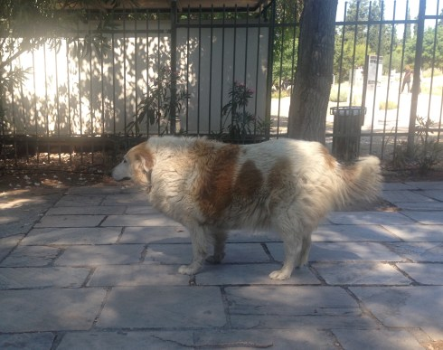 The last dog in Greece with the courage to stand on his own four paws.