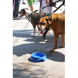 Excellent Dogs Eliminate Heat Through Ir Paws By If Y Do Not Haveaccess To Shade Queens Pet Sitting Fresh Water Course Y Can Get Too Just Likewe Can My Dog Get Too Kings bark post Why Is My Dog Panting