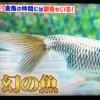 銀魚が『究極の○×クイズSHOW!!超問!真実か?ウソか?』に!K's銀魚動画付