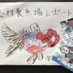 志村養魚場 訪問記 part4 最終回 金魚生産者への想い・・・