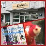 """古澤琉金フェアに合わせて""""金魚専門店カハラ""""さんから琉金を紹介します"""