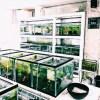ダイナミックな江戸錦と輸入コロコロ金魚 &カハラさんの大型水槽