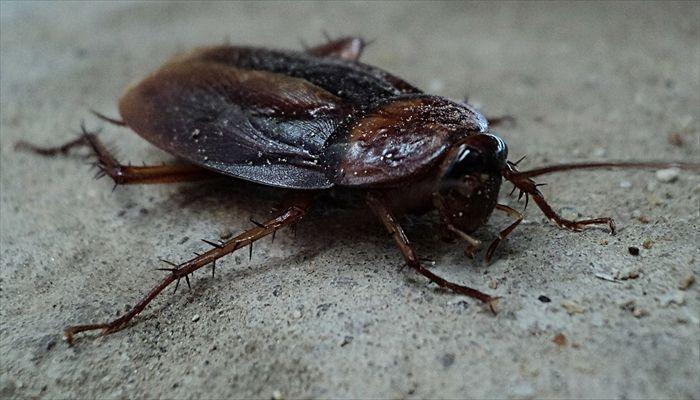 夏にしたいこと ゴキブリと対戦