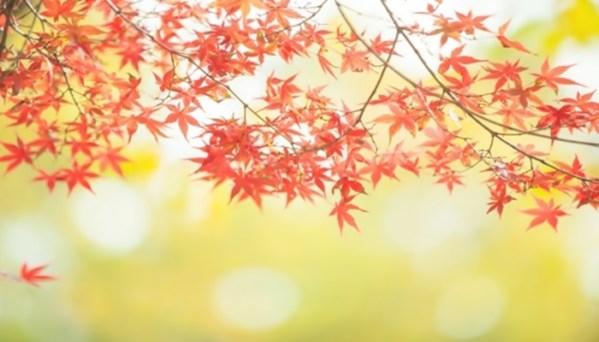 秋にすること 秋にしたいこと
