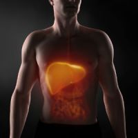 body-liver