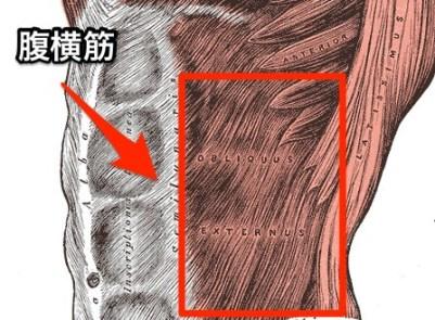 Grays_Anatomy_image392