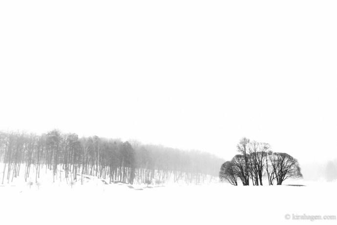Late spring in Tsaritsino Park