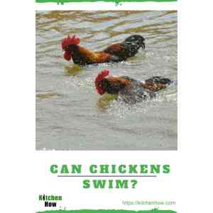 Engaging Can Your Kens Swim Can Kens How Well Can Y Fact You Should Know Can Kens Eat Grape Plants Can Kens Eat Grapes Uk