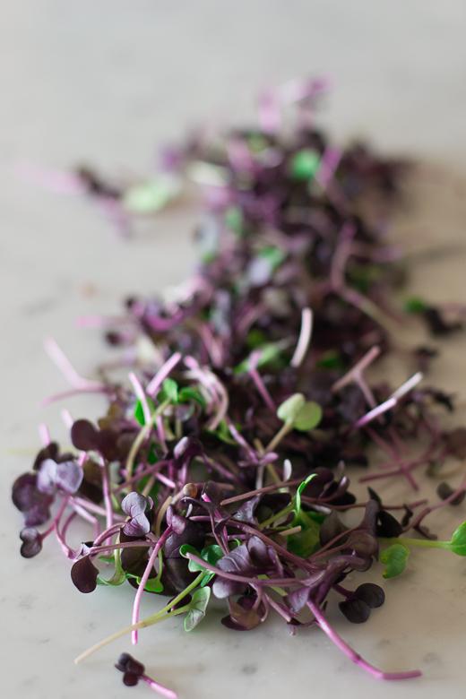 purple daikon radish microgreens