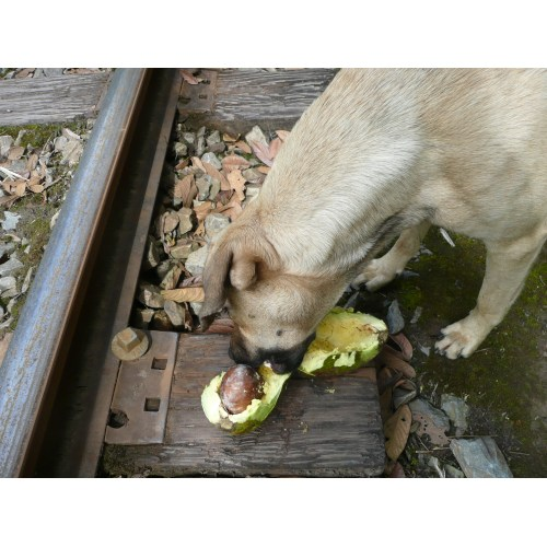 Medium Crop Of Can Dogs Eat Avocados