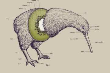 anatomy-kiwi-bird_1332094270239624