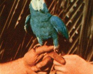 areyouserious_bird