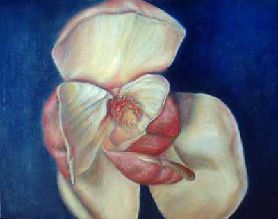 Magnolia, Floral Oil Painting