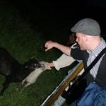 Det fina med att vara på fest på landet är att man får klappa lamm på vägen hem