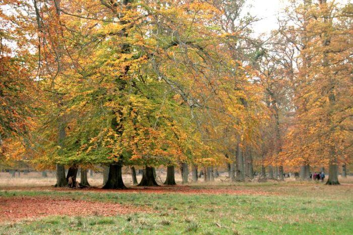 bomen dyrehaven