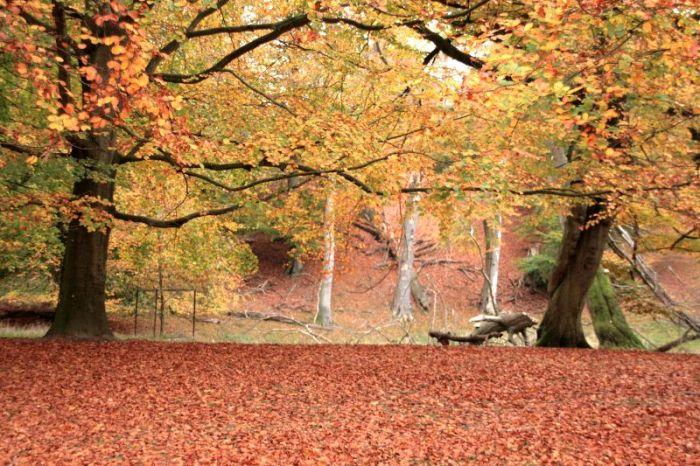 Geel, rood en drie spookbomen