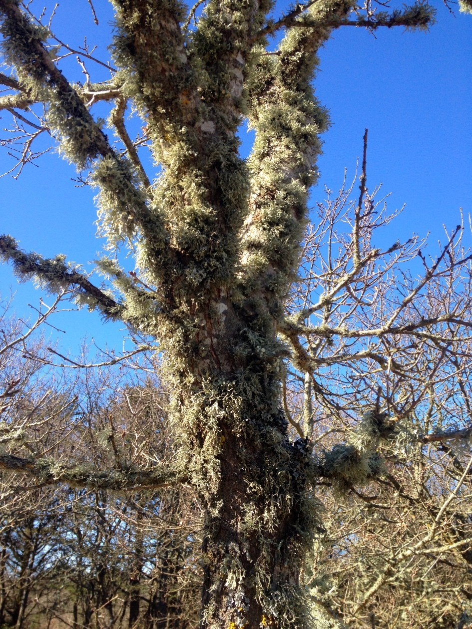 Earth calling tree?