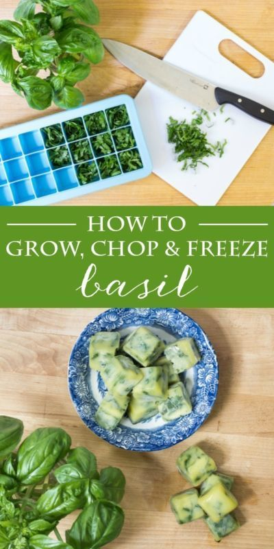 Pin Ups and Link Love: How to Chop and Freeze Basil | knittedbliss.com