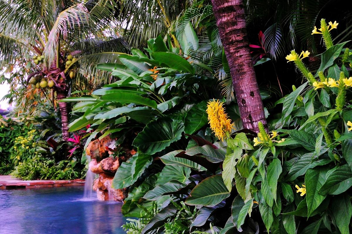 Piquant Landscape Ideas Landscape Ideas South Florida Front Design Florida Friendly Landscaping Ideas Florida Landscaping Ideas houzz-03 Florida Landscaping Ideas