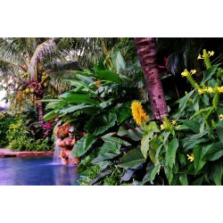 Small Crop Of Florida Landscaping Ideas