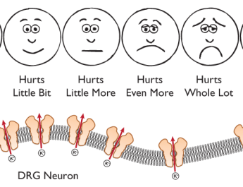 Channeling Your Response to Pain Knowing Neurons Neuroscience