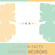 Myth or Fact? Artists use their right brain significantly more than their left brain.