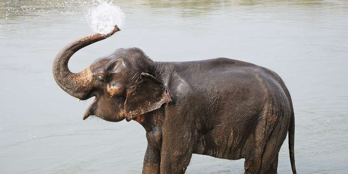 Scientific name for asian elephant was