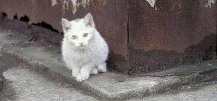White Cat in Urban Setting