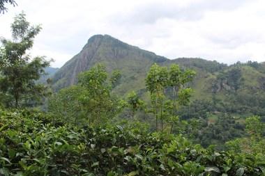 SriLanka_Blog1_008