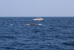 Walvis gespot! (1)