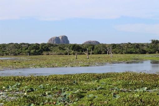 Middagsafari in Yala park