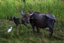 Safari in de vroege morgen in Bundala park