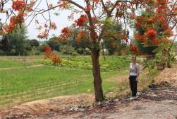 Blog0716-Thailand-IMG_4153