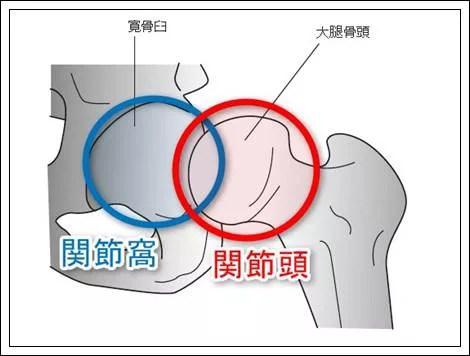 股関節の解剖機能形態1
