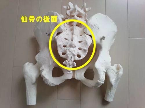 股関節内転筋のストレッチの正しい方法20