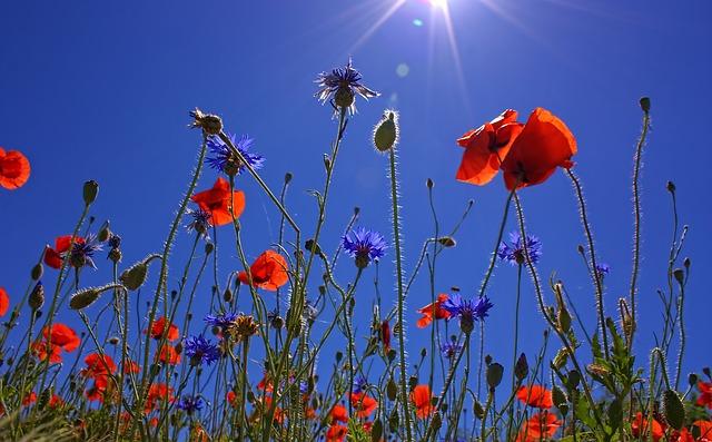 人生には、花開く瞬間が必ず来る