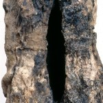 Chrysalis detail