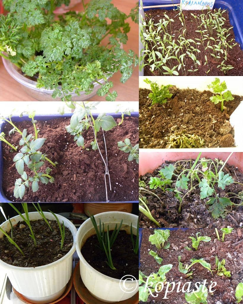 Collage herbs