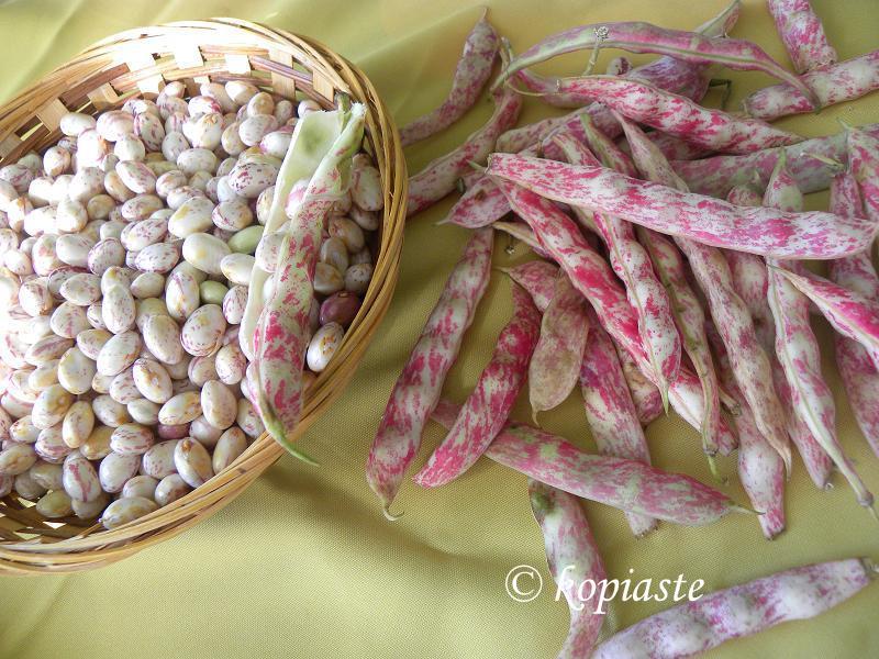 runner beans 2