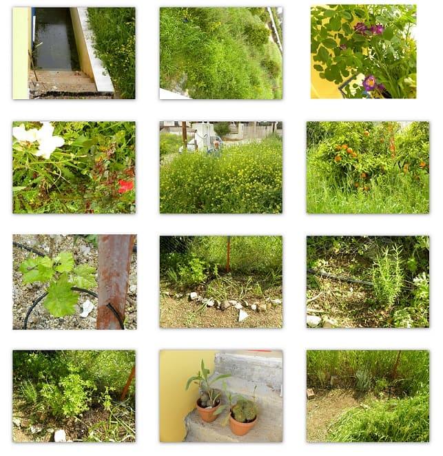 Collage return to Assini April 2014